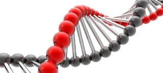 Was sind Gene?