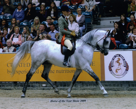 Egatist - Champion Stallion Horse of the Year Show