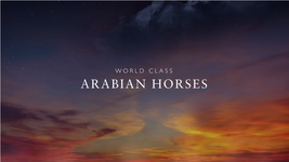 World Class Arabian Horses