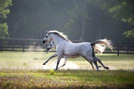 Love Horses?