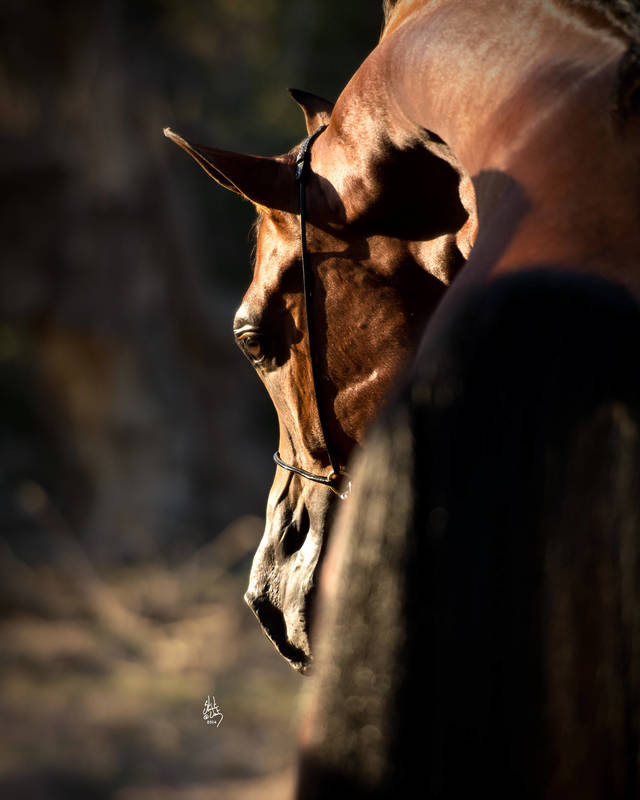 Mi Regalo Di Angelo :: Shellbird - Rising Hearts Ranch