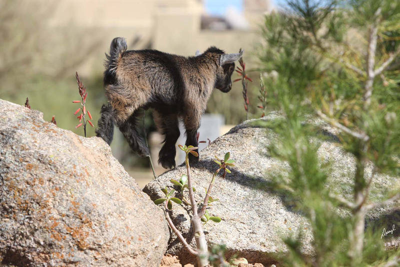Hutch rock climbing