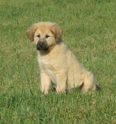 Delta as a puppy