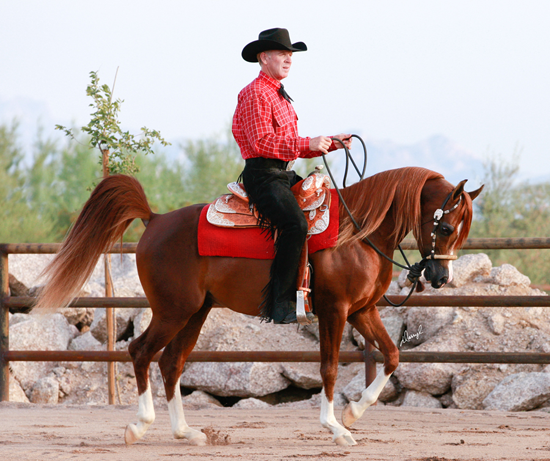 Jagger under saddle