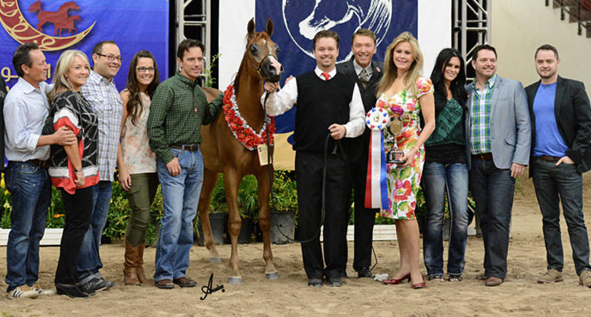 Bravo SWF (Jagger SWF x Focus Starlet)