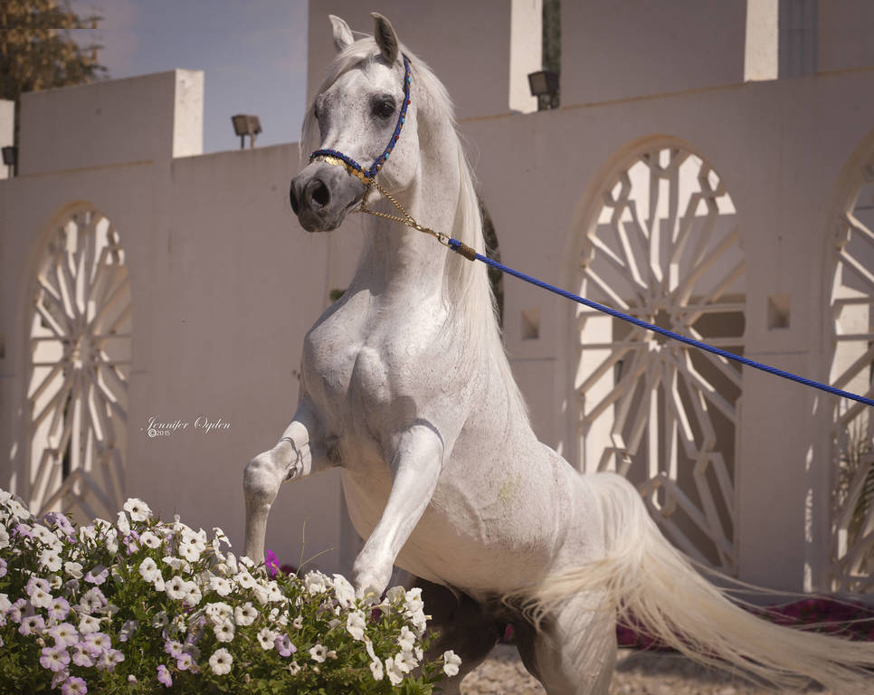 Al Nakeel SWF at his home in Qatar
