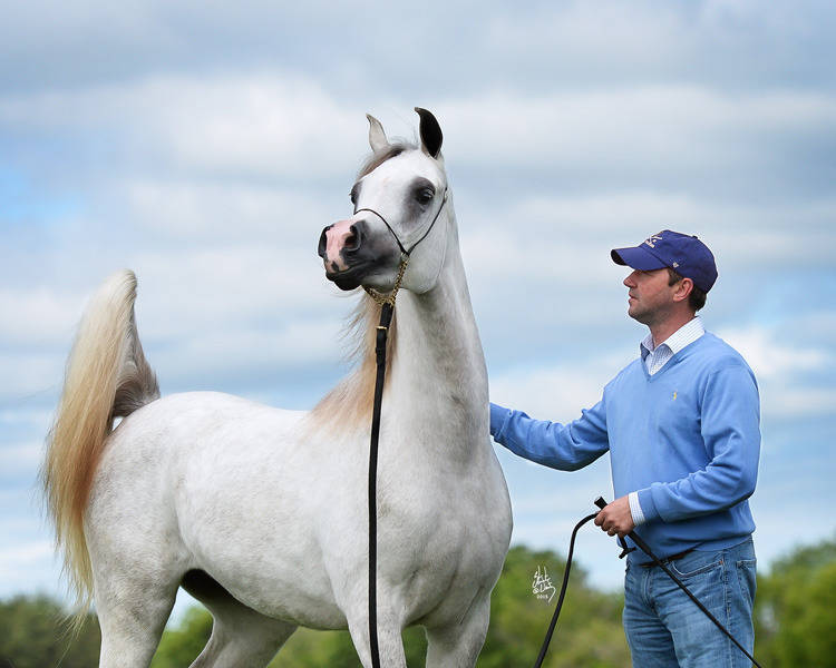 Serena SWF as a two-year-old with her trainer Andy Sellman