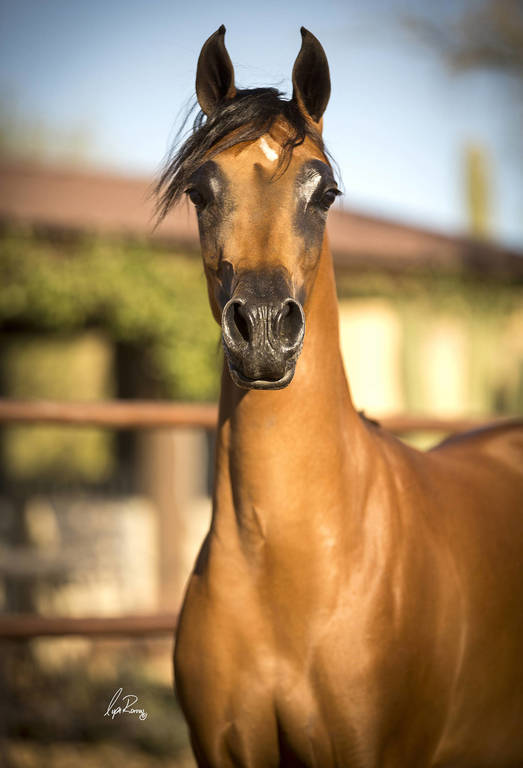Tanzy as a yearling
