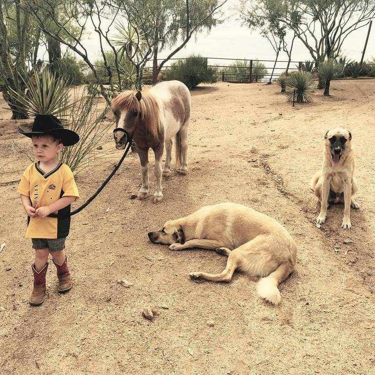 Chase out for an evening stroll around the farm with his pony Dixie, Delta and Wesley