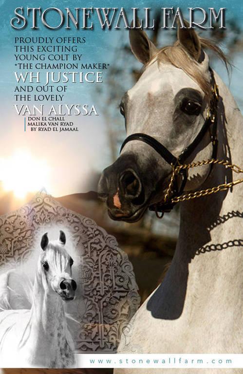 Rohara Extrem Justice