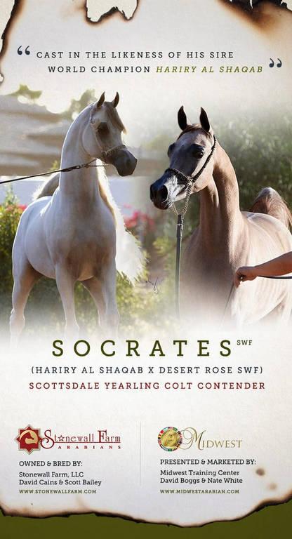 Socrates SWF