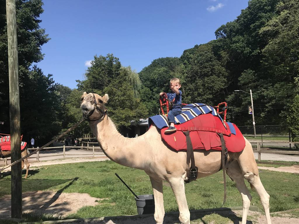 Hunter going for a camel ride at the Cleveland Zoo