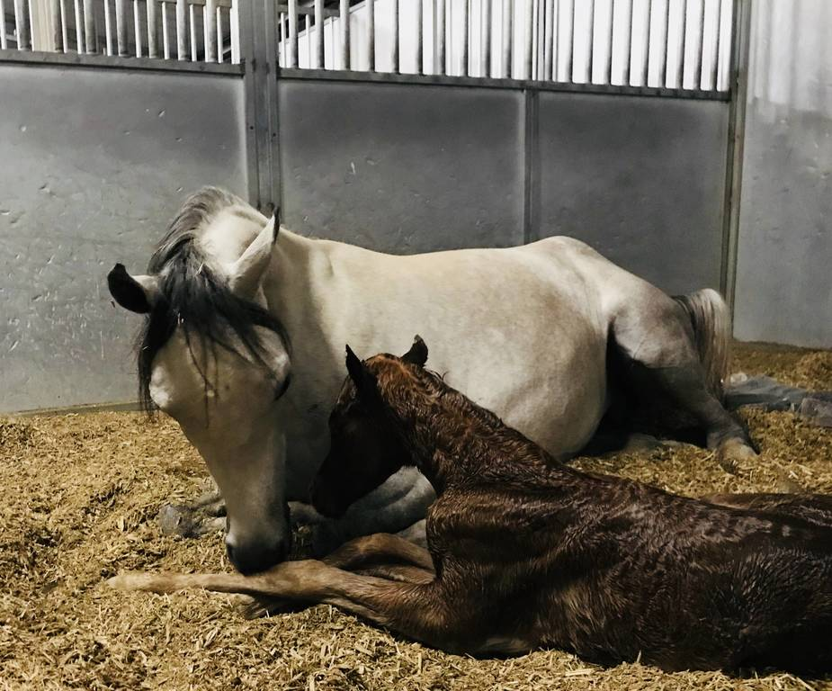2018 New Foals - Amateur pictures