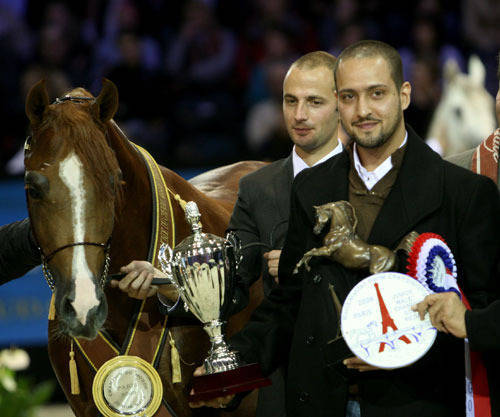Abha Qatar 2009 World Champion Junior Stallion &