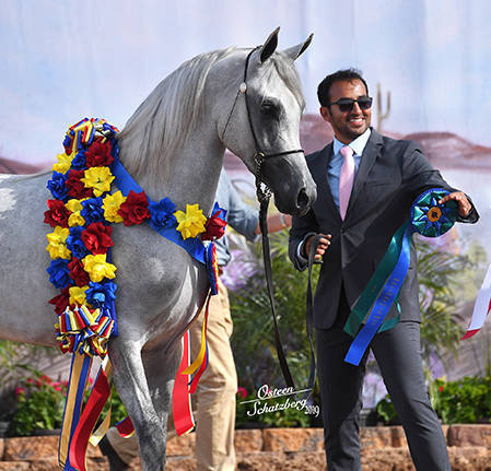 Kamal & Muteb winning 2019 Champion Scottsdale Signature Stallion Two-Year-Old Colt