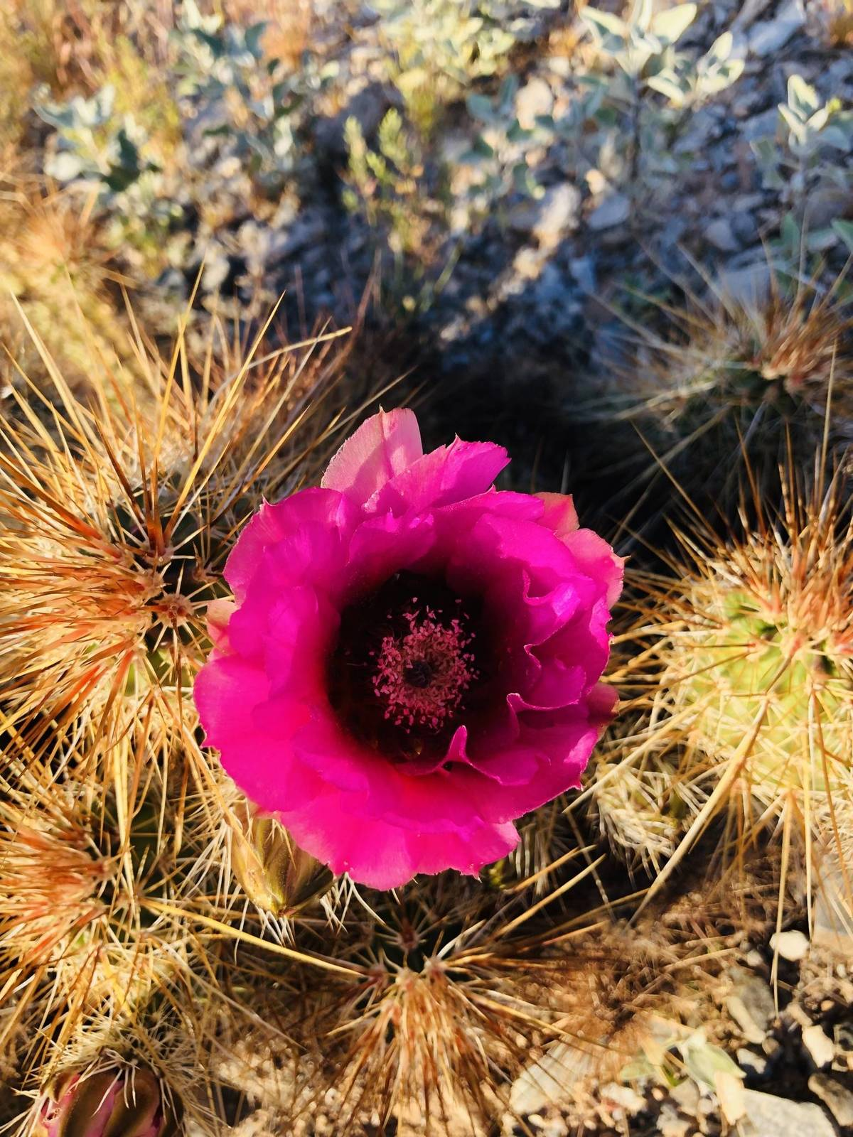 Springtime in the desert 2019