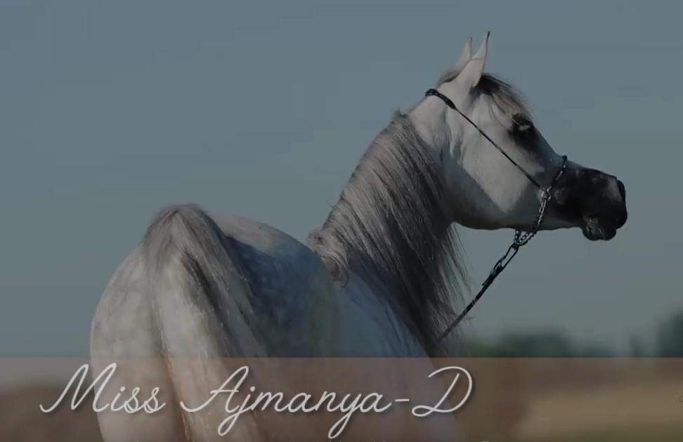 Miss Ajmanya-D