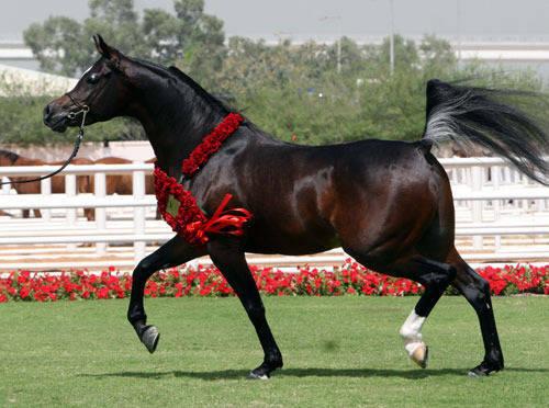2007 World Champion Colt Royal Colours