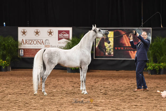 Kamal and Paul Glans at the 2019 Arabian National Breeders Final