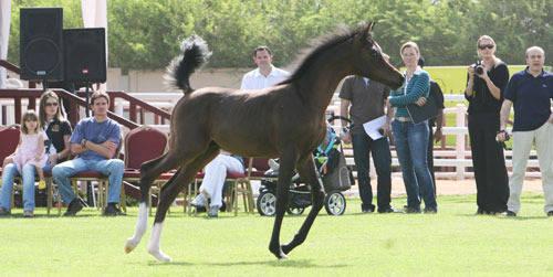 A Royal Colours foal