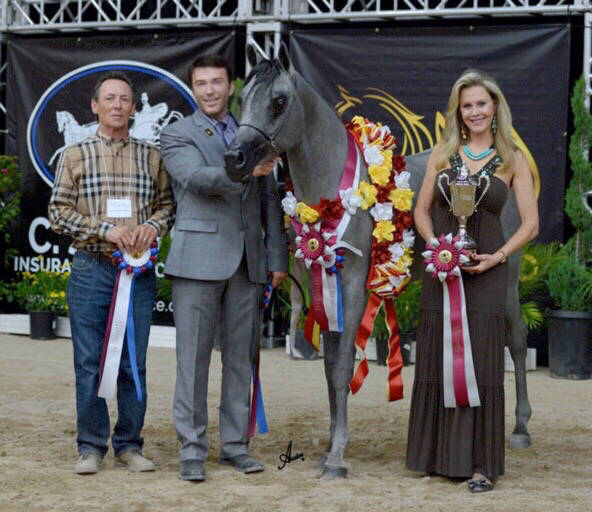Terry, David & Marsai Mara SWF - AHBA Reserve Champion Two-Year-Old Futurity Colt