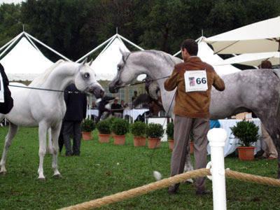 France, St Tropez - The Arabian Cup Horse Show