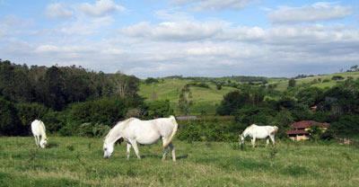 The beautiful mares of Haras Meia Lua