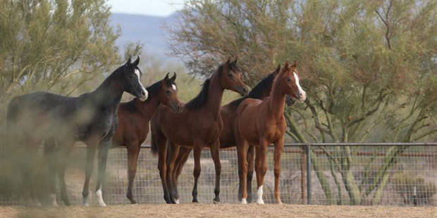 Starting a Horse Breeding Company – Business Plan Template