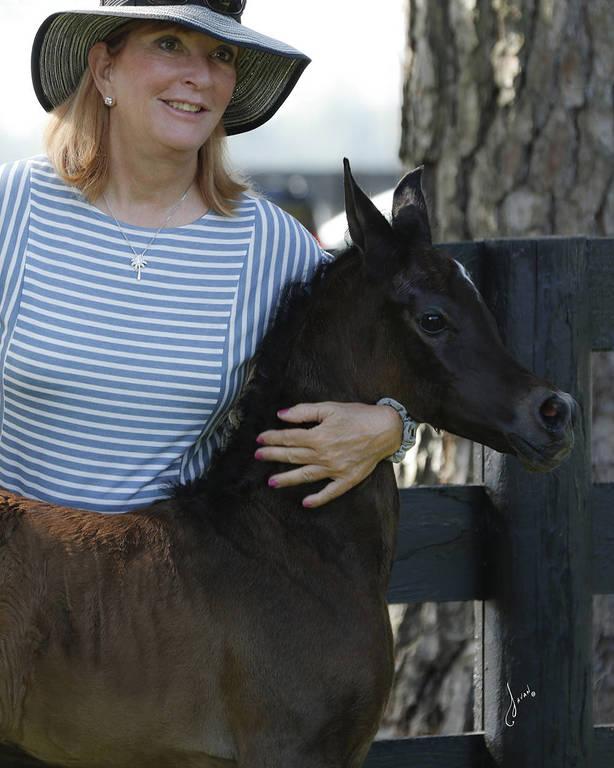 Kathleen & Tom Petrelli, Kleio Arabians