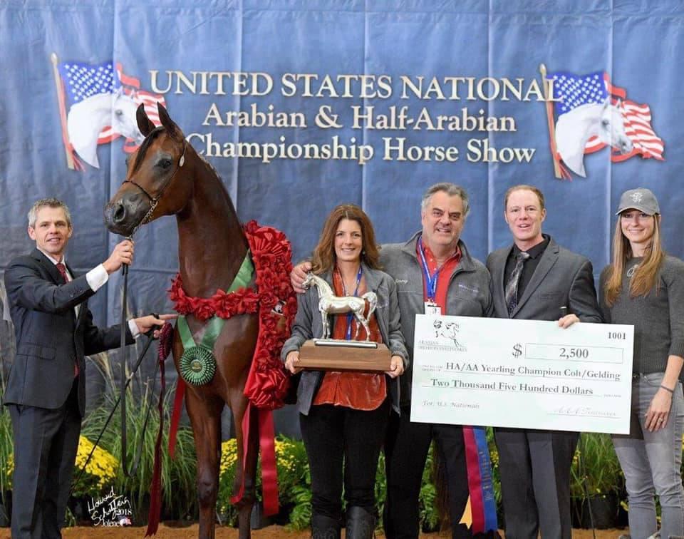 Lisa Gaudio and Jimmy Kazanjian, Kyrie Arabians