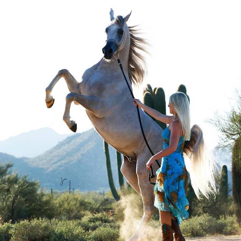 Jennifer Dhombre, Kalliste Arabians