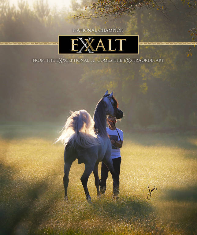 EXXALT- From the Exxceptional... Comes the Exxtraordinary