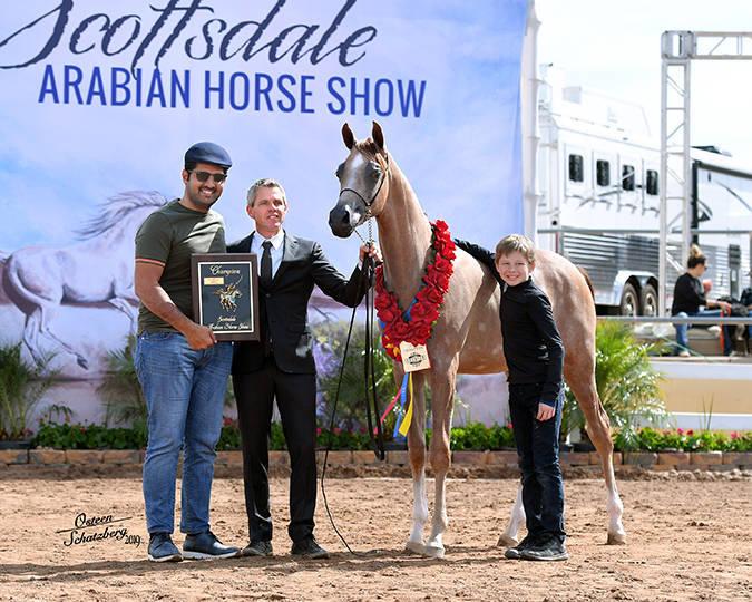 Faisal Almarri, Al Shahania Stud