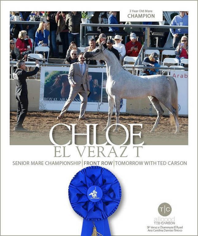 Chloe El Veraz T- Scottsdale Champion 3 Year Old Mare