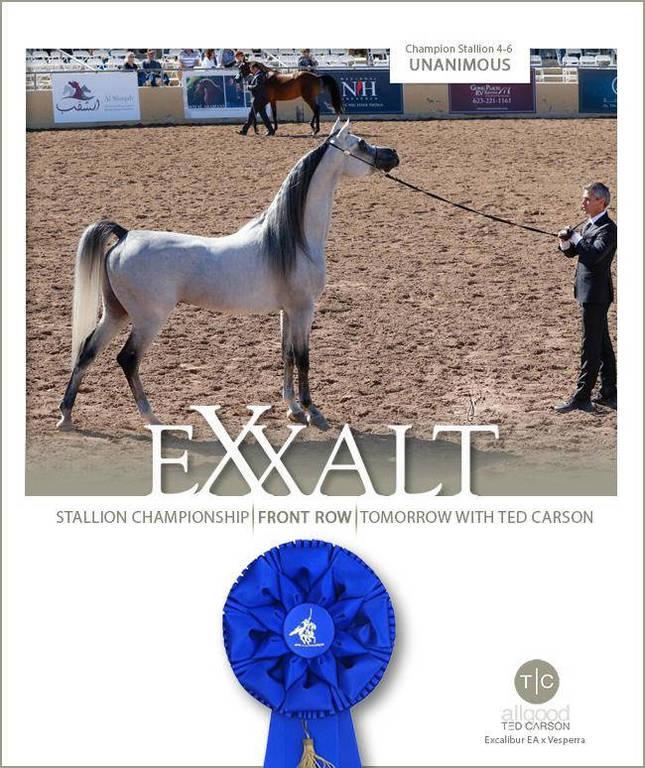 Exxalt- Unanimously Chosen