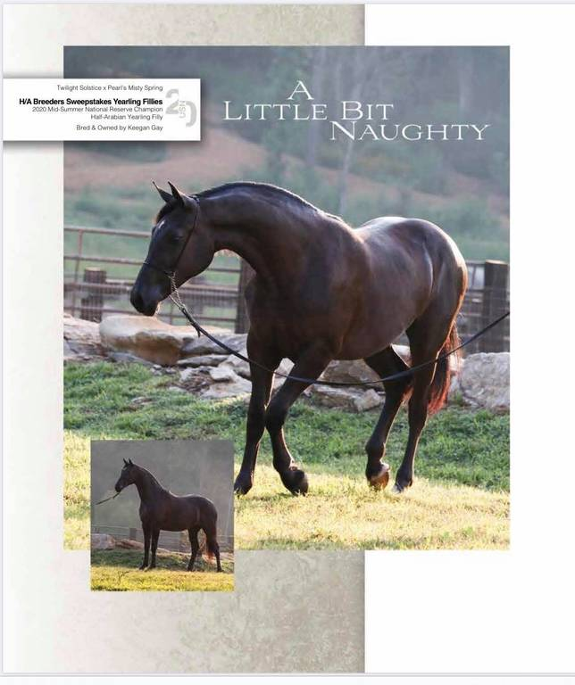 A LITTLE BIT NAUGHTY - US NATIONALS SWEEPSTAKES FILLIES