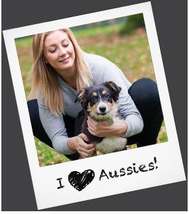 Australian shepherd puppies amp dogs for adoption