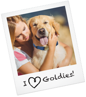 Golden retriever puppies arizona adoption