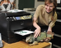 Epson WorkForce Pro WP-4540 Helps Wildlife Waystation Keep the Lions Roaring
