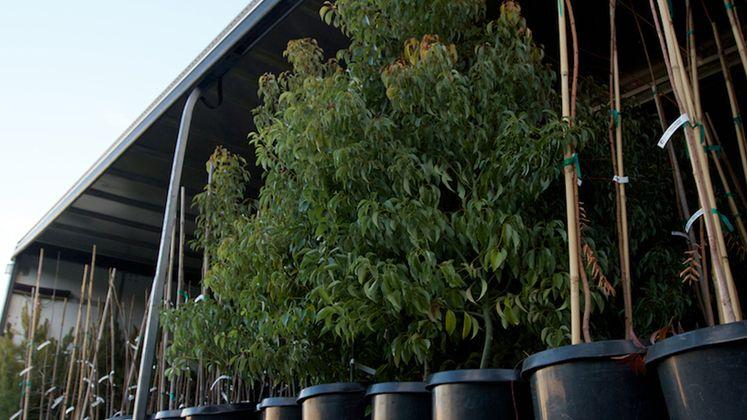 Tree Donations