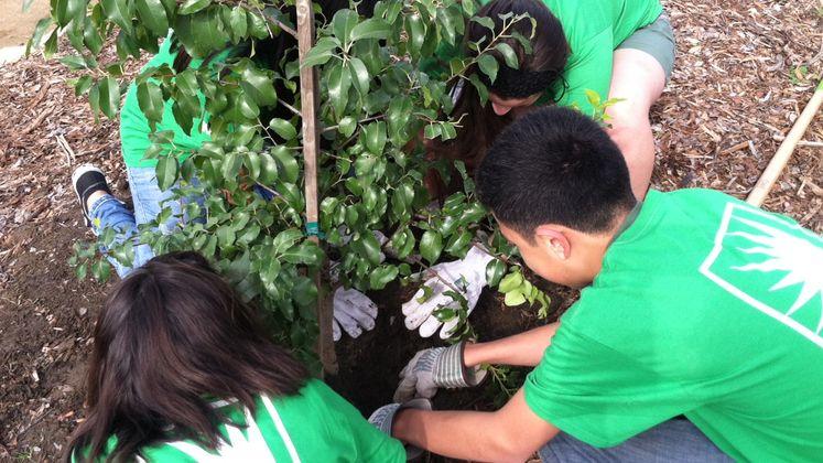 Tree Planting - South Gate