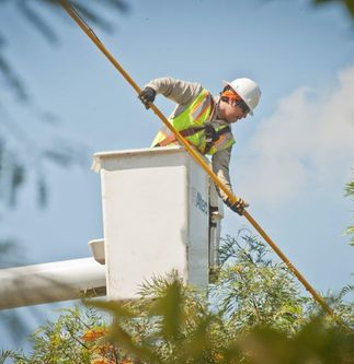 Trees and Power Lines: Plant Smart, Trim Smarter