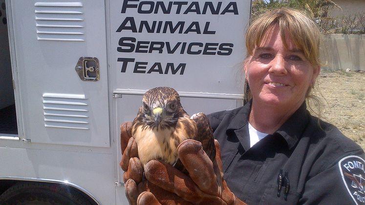 SCE crew rescues hawk