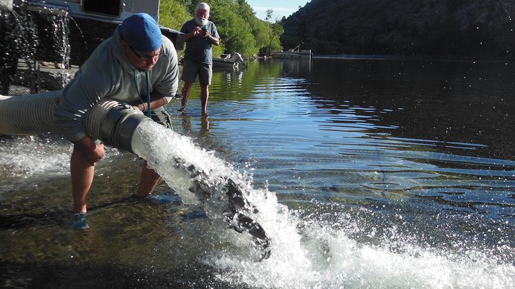 SCE Trout Stocking