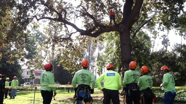 SCE and Hispanic Arborist Association