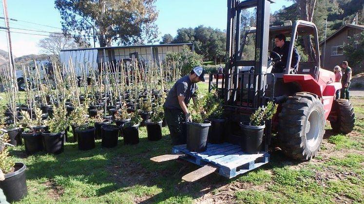tree donations to Santa Barbara