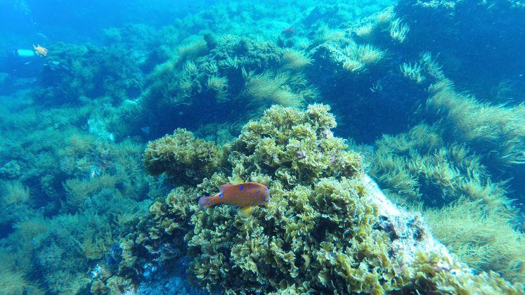 Reef Check and Edison International