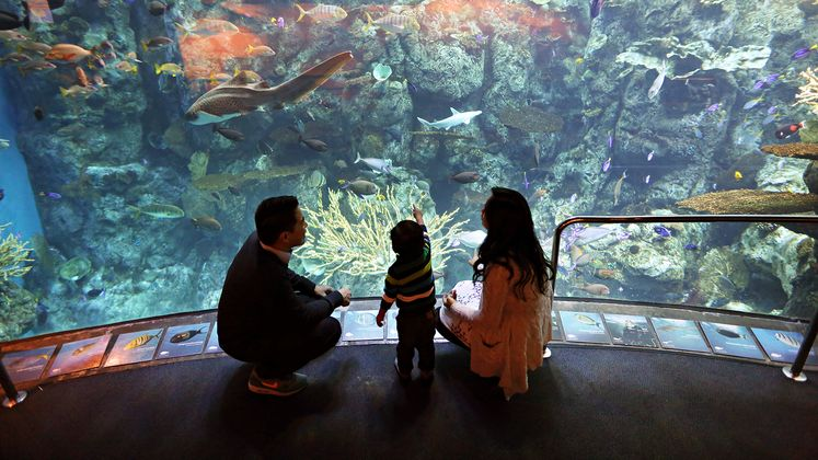 Aquarium of the Pacific energy efficiency