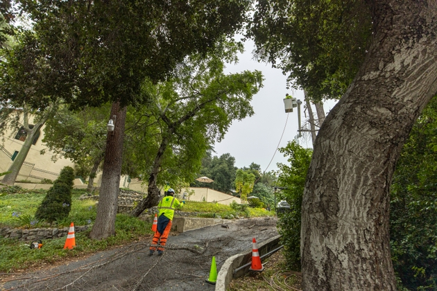 TREE+TRIMMING+COVINA-6477