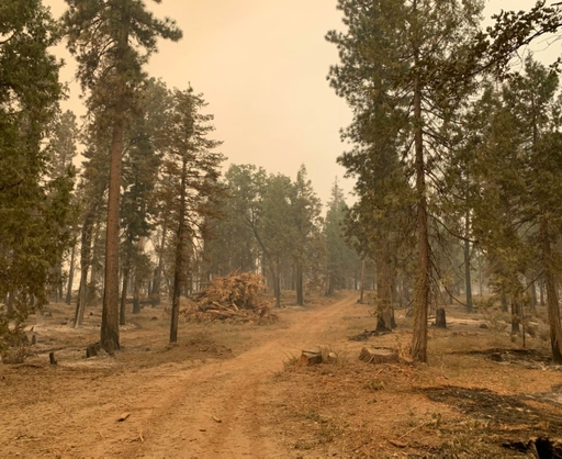 The Highway 168 Fire Safe Council implemented a fuel break on SCE grounds (West Shaver Lake).